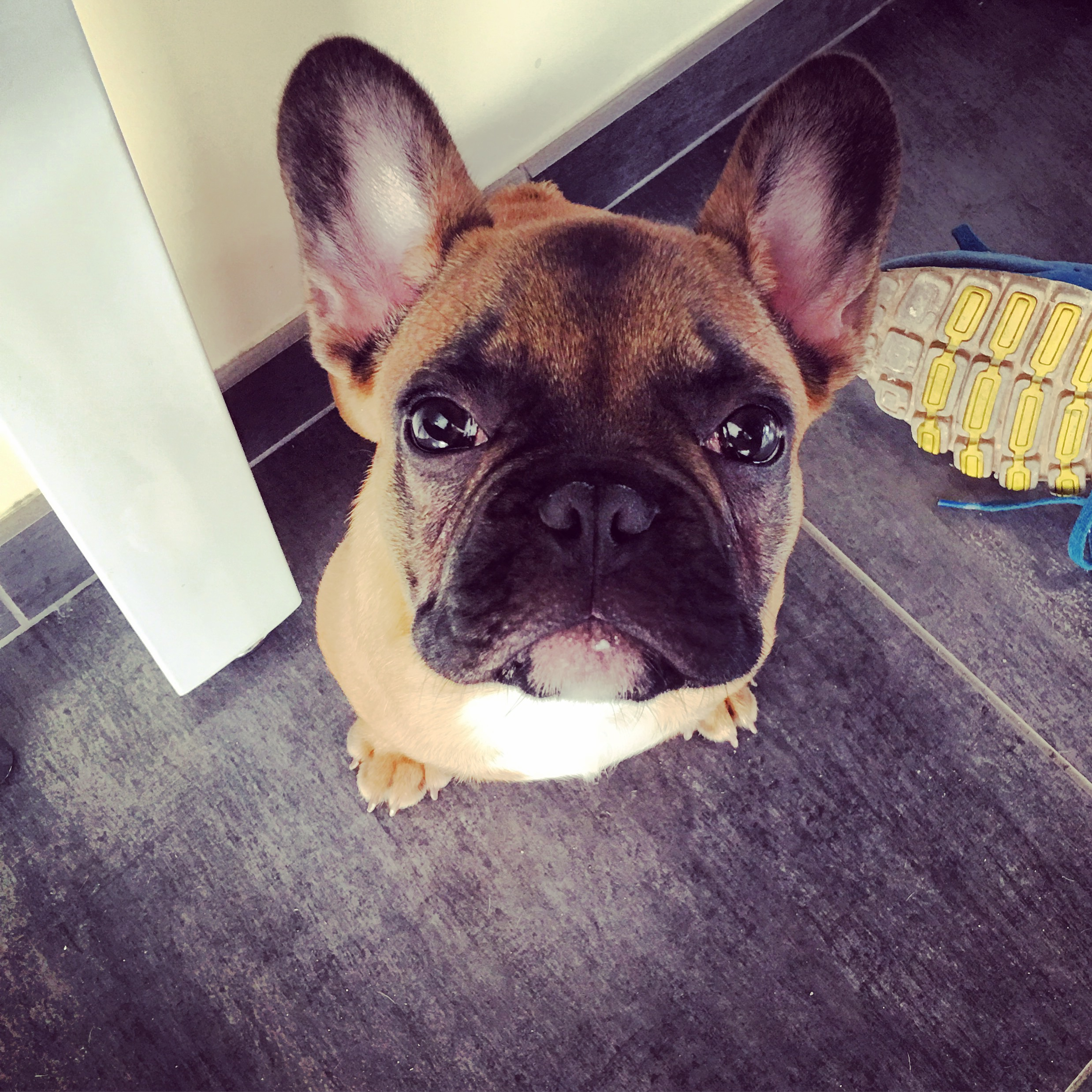 janusz_the_frenchie_13