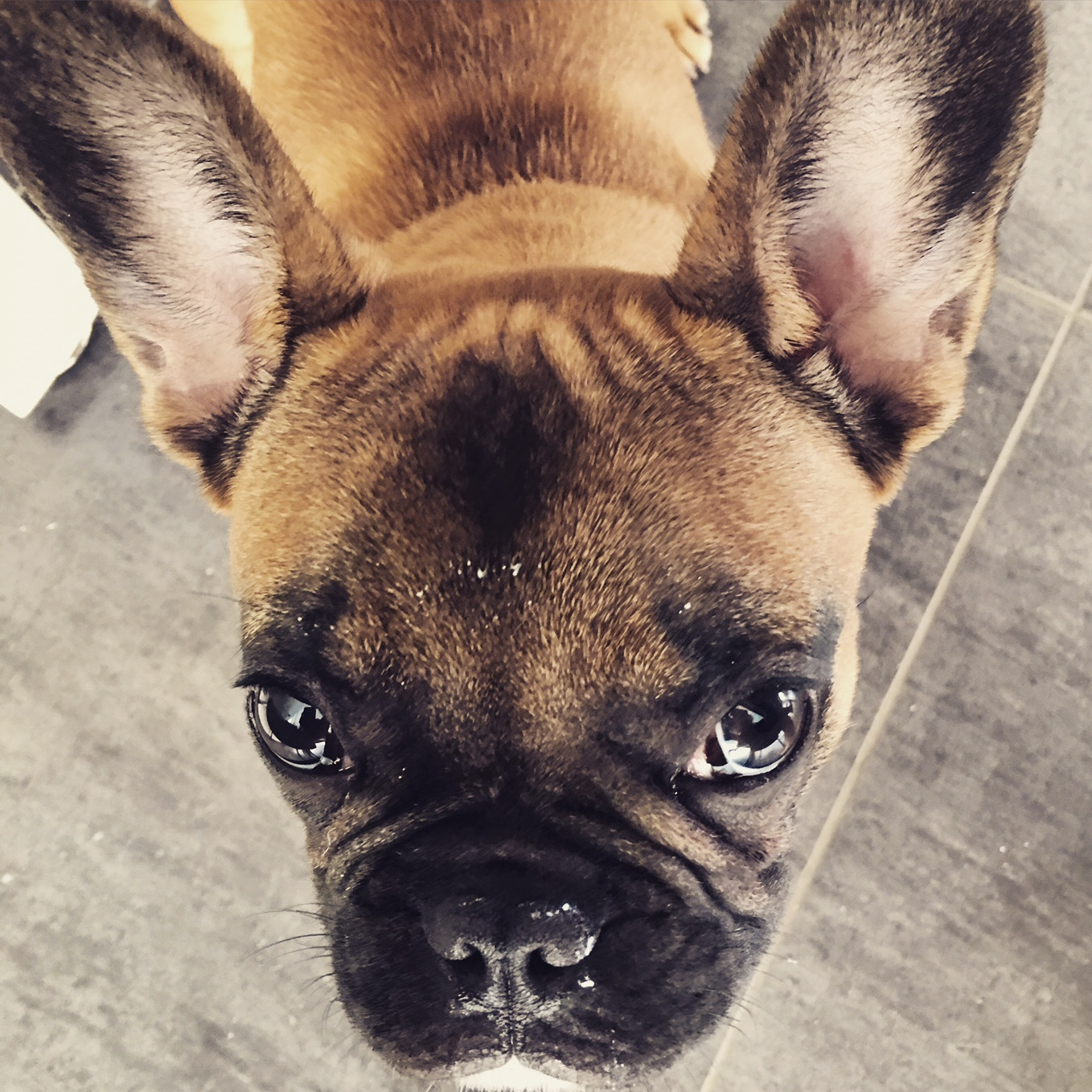 janusz_the_frenchie_17