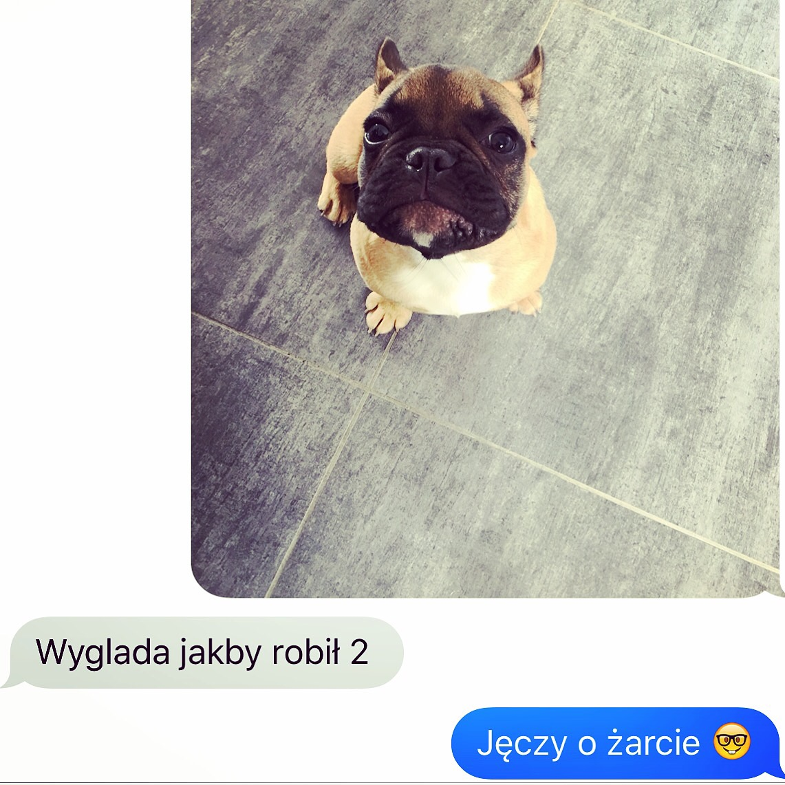 janusz_the_frenchie_22